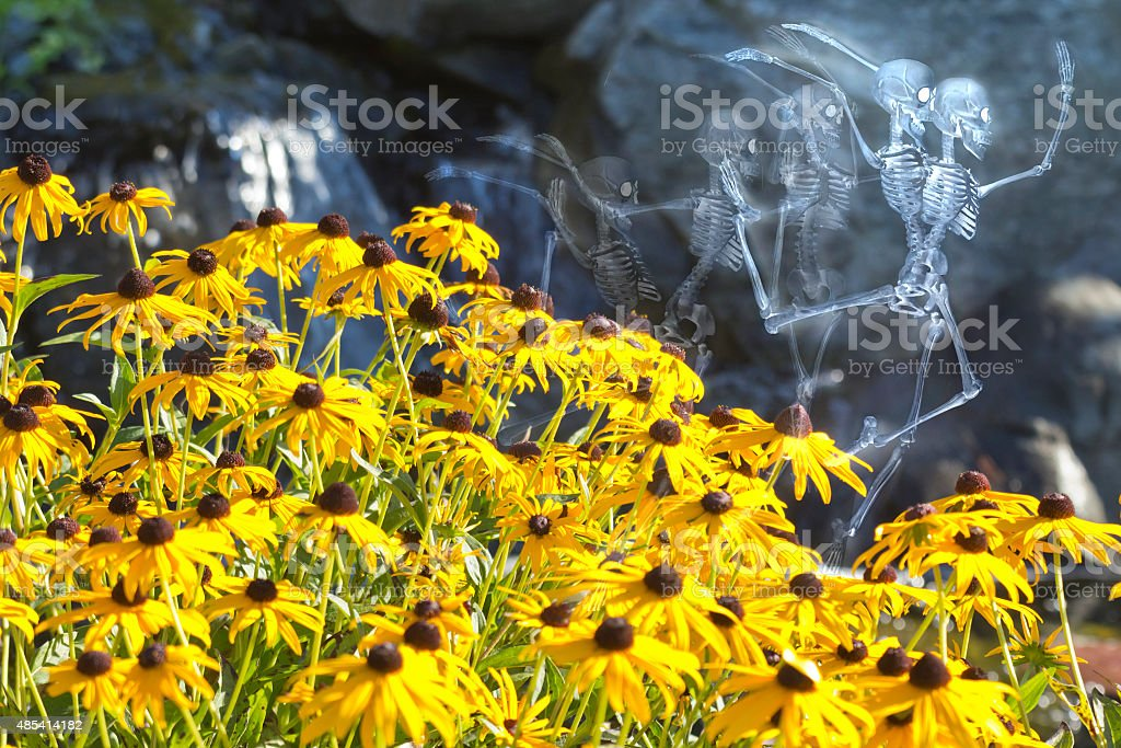 Dancing Skeleton Flowers stock photo