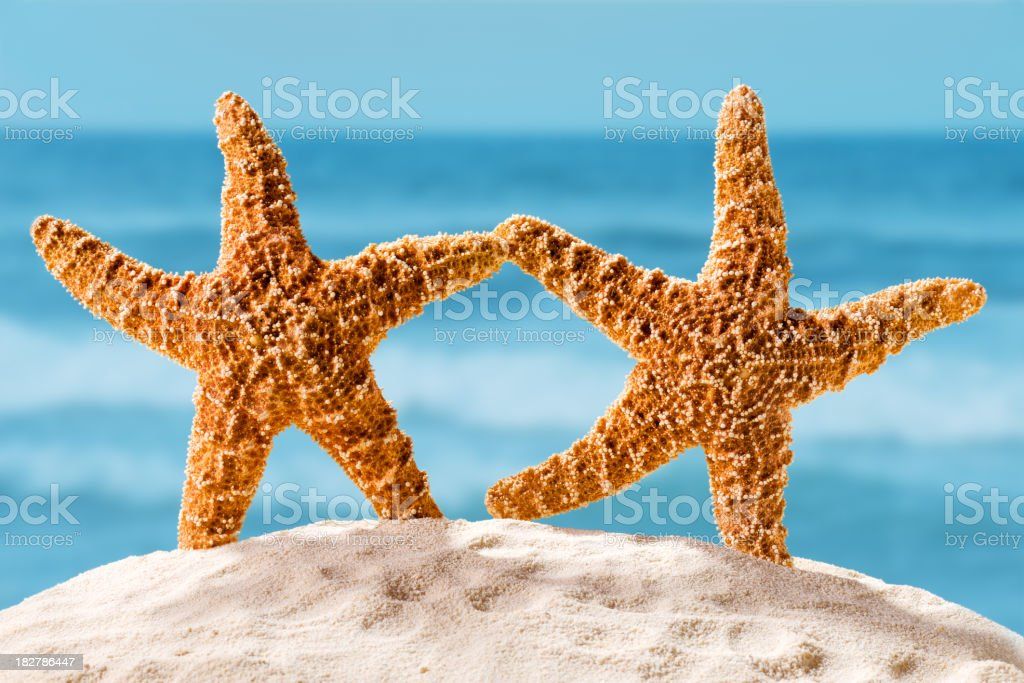 Dancing starfish on the white sand in front of the beach royalty-free stock photo