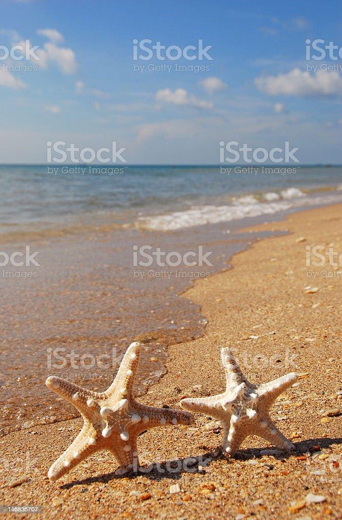Dancing Starfish royalty-free stock photo