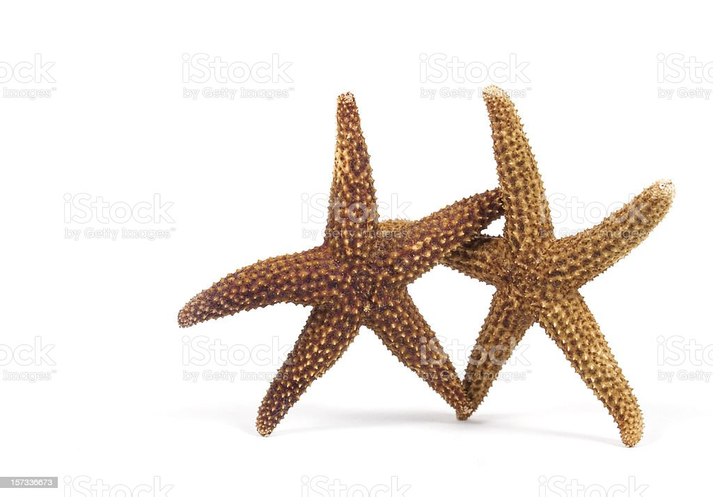Dancing Starfishes royalty-free stock photo