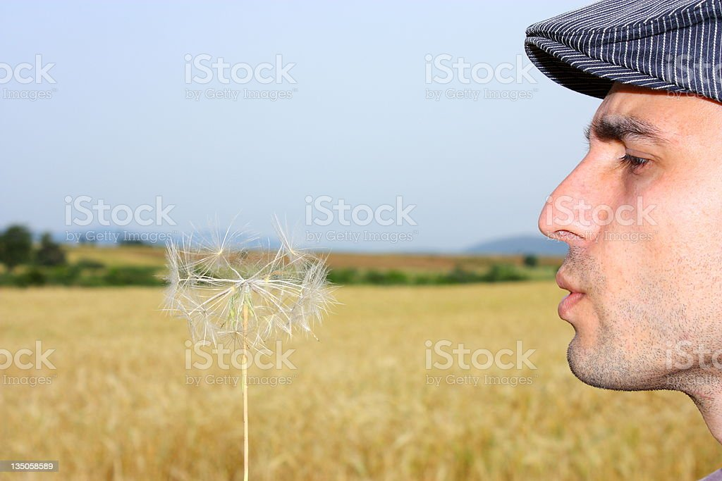 Dandelion and man royalty-free stock photo