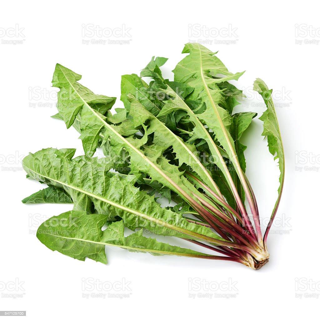 Dandelion, Dandelion Green, Leaf Vegetable stock photo