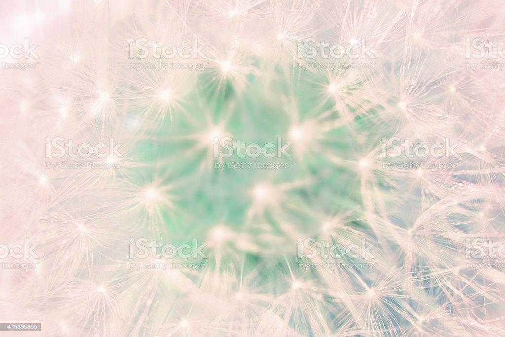 Dandelion detail royalty-free stock photo