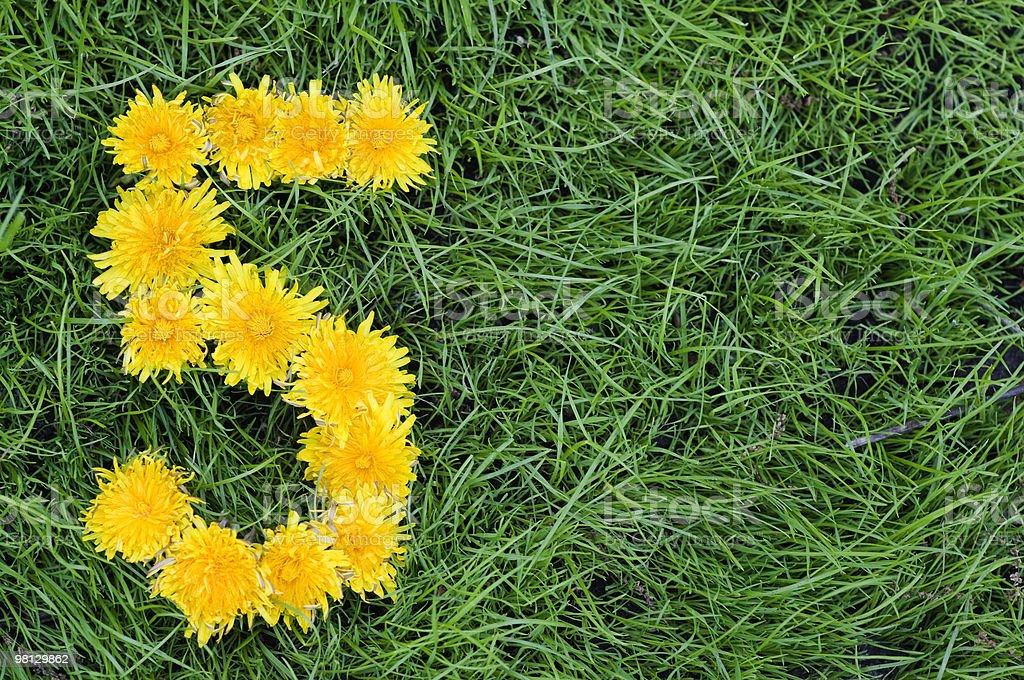 Dandelion 'Five' stock photo