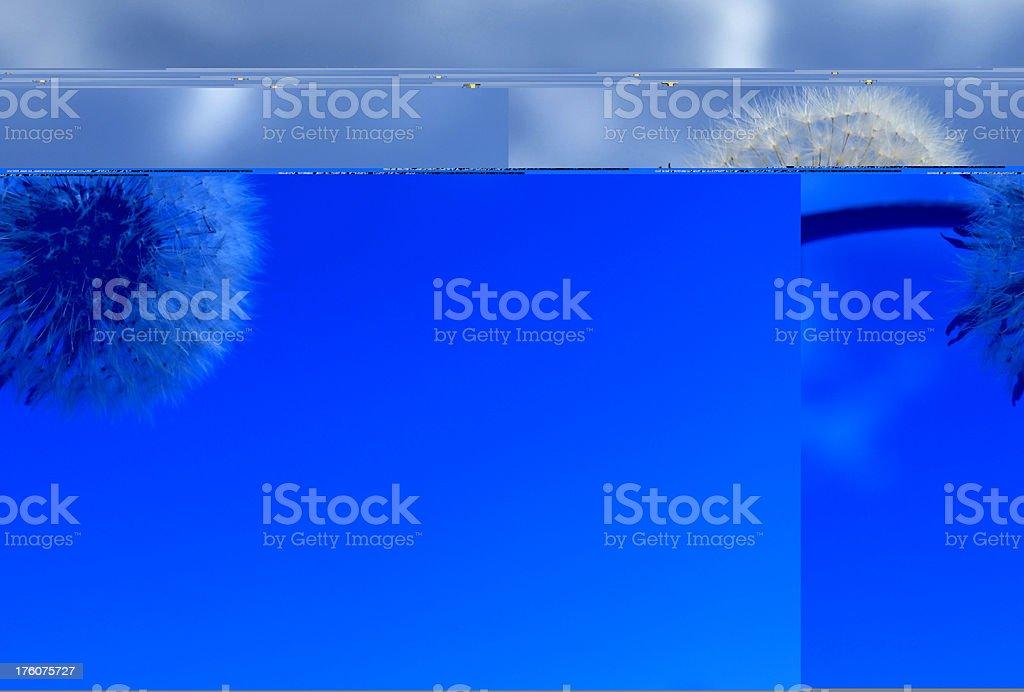 dandelion fluff on blue stock photo