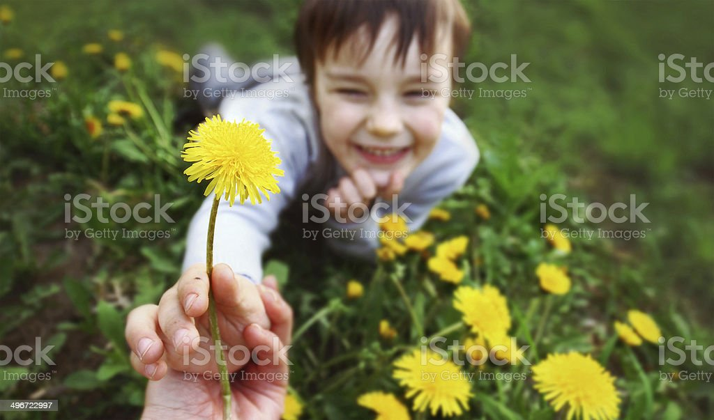 Dandelion for mummy stock photo