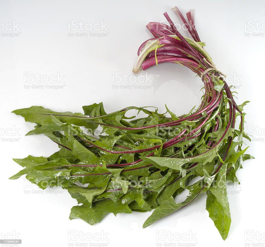 Dandelion greens royalty-free stock photo