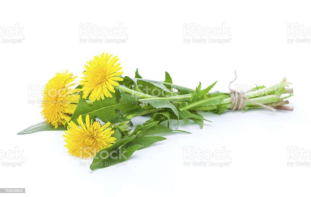 Dandelion herbal royalty-free stock photo