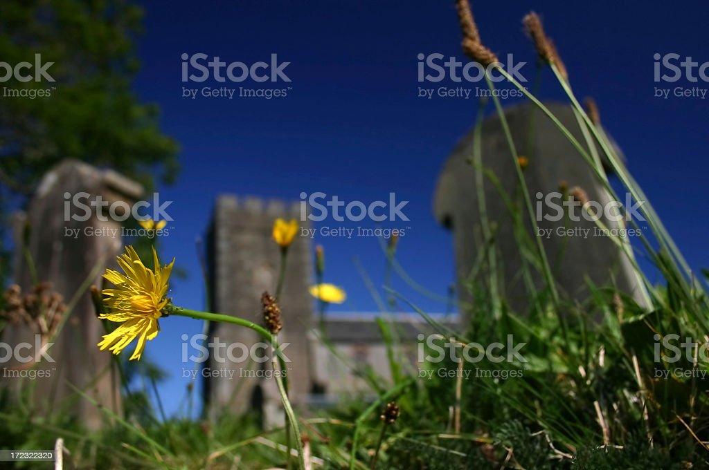Dandelion in a Graveyard royalty-free stock photo