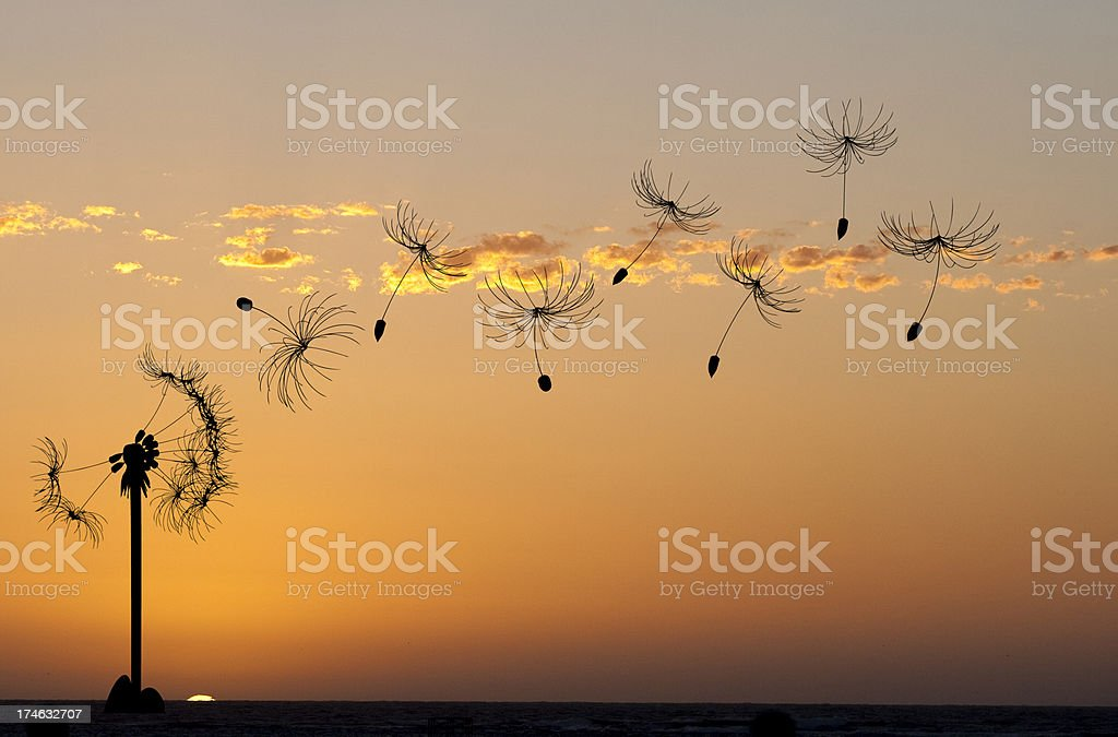 Dandelion in the breeze royalty-free stock photo