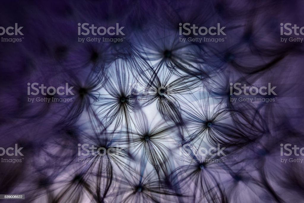 Dandelion Macro with inverted colours stock photo