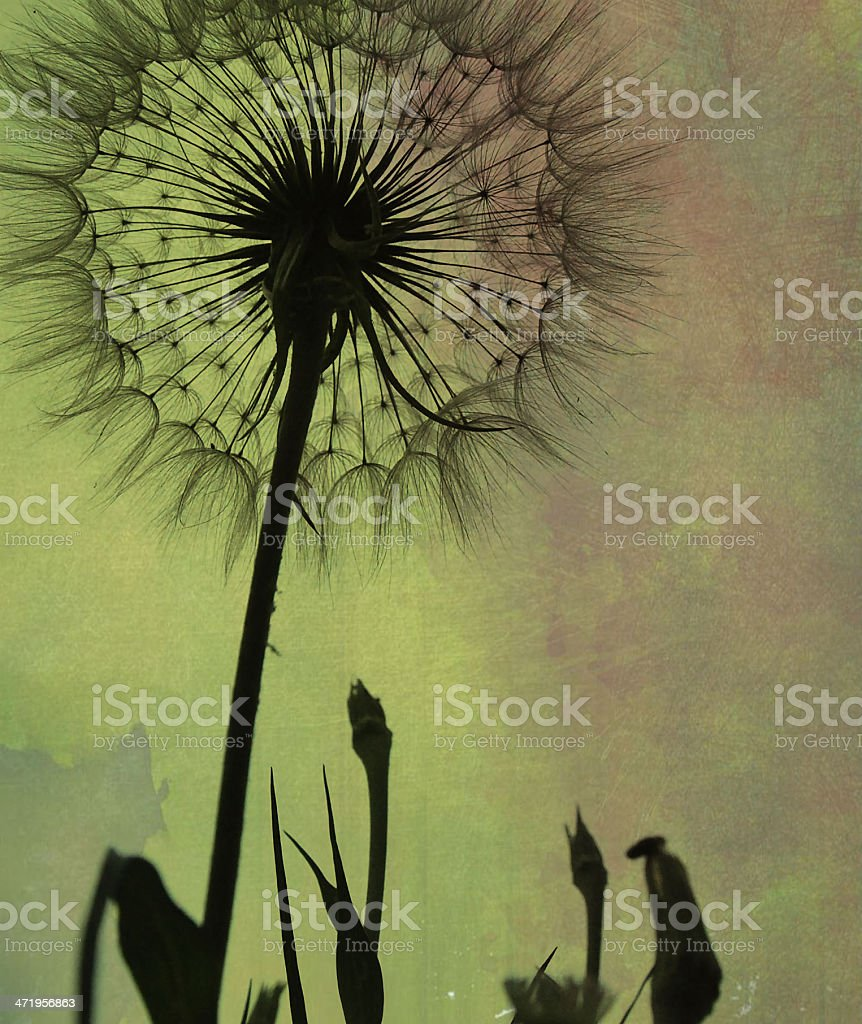 Dandelion pattern royalty-free stock photo