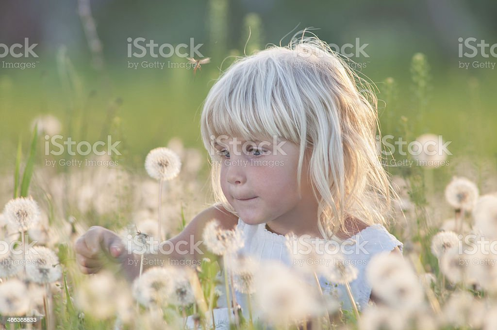 Dandelion princess collecting flowers in field royalty-free stock photo