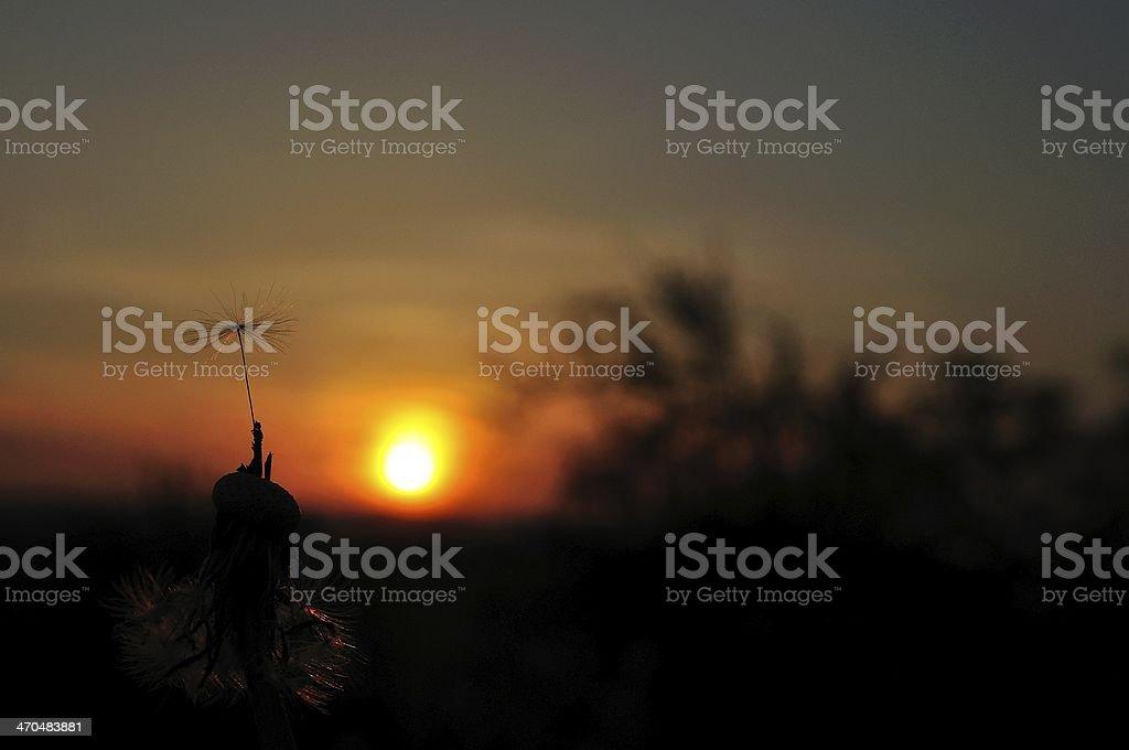 Mniszek sylwetka na zachód słońca z ostatniego punktu początkowego zbiór zdjęć royalty-free