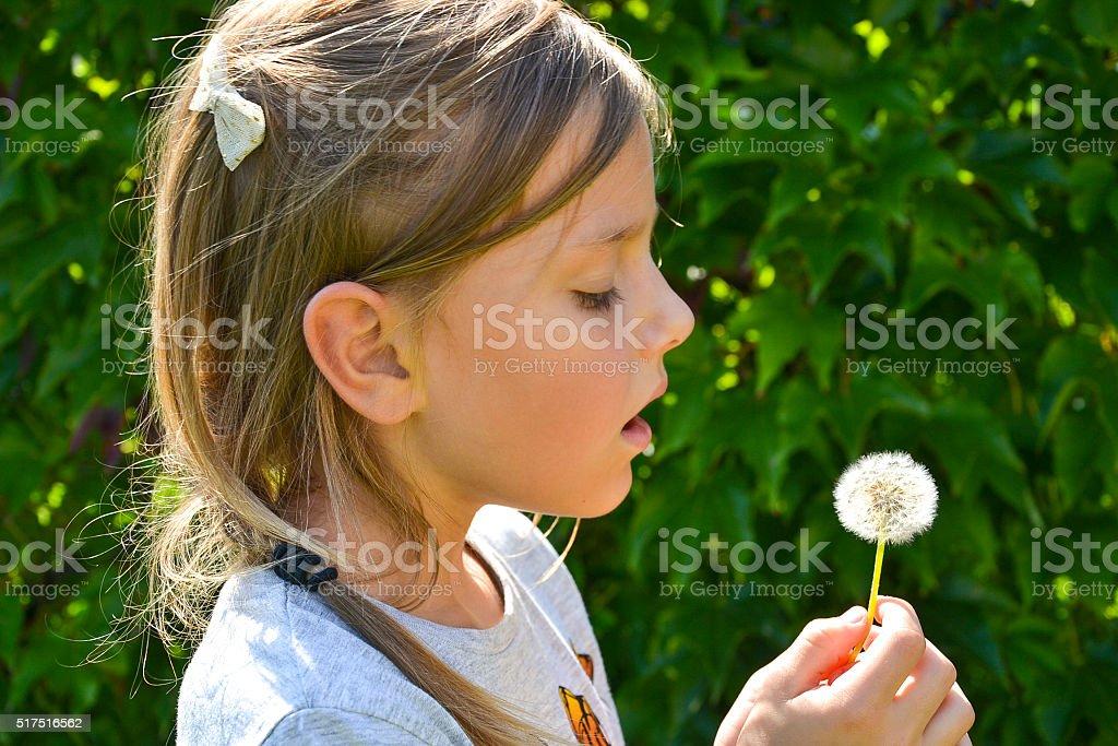Dandelion wish stock photo