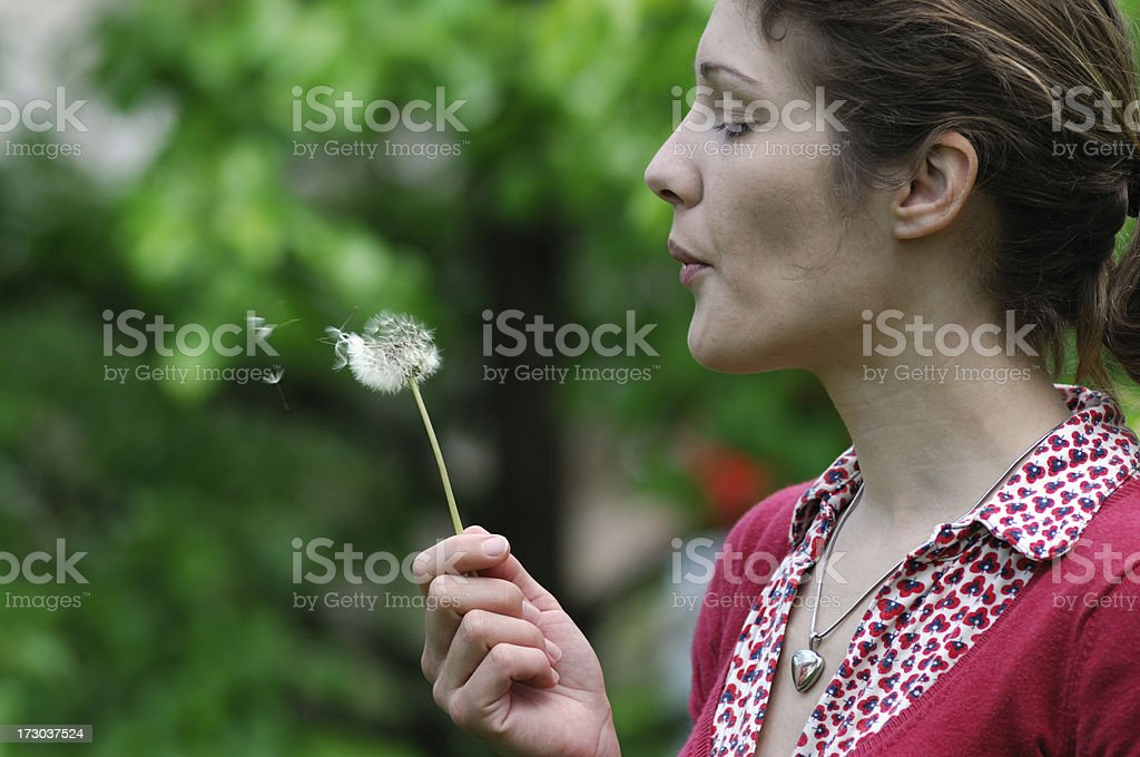 Dandelion Wishes royalty-free stock photo