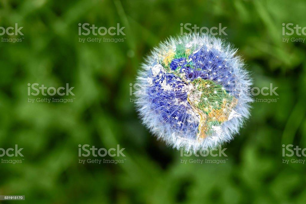Dandelion with earth shape stock photo