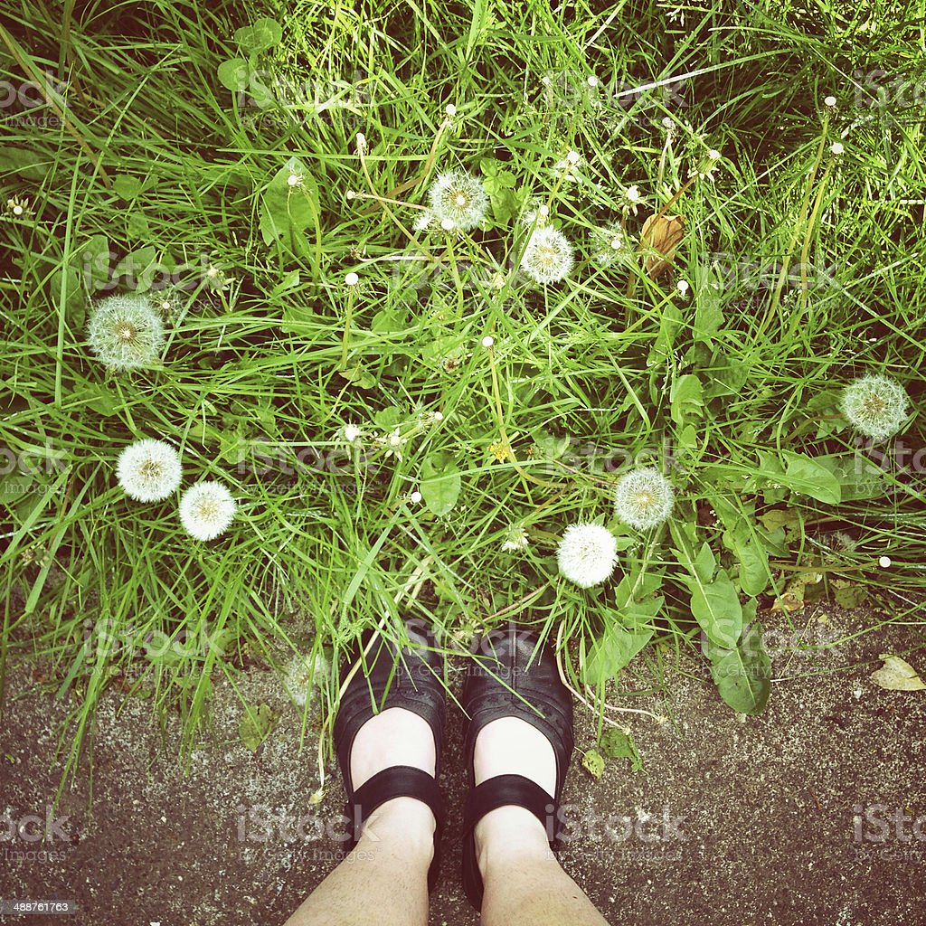 Dandelions and Summertime Shoes stock photo