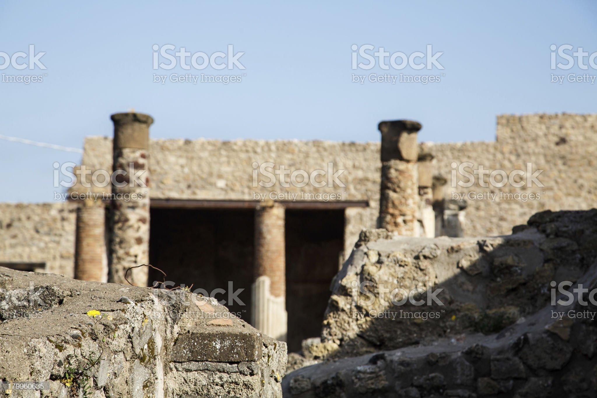 Dandelions Growing in Pompeii Ruins royalty-free stock photo