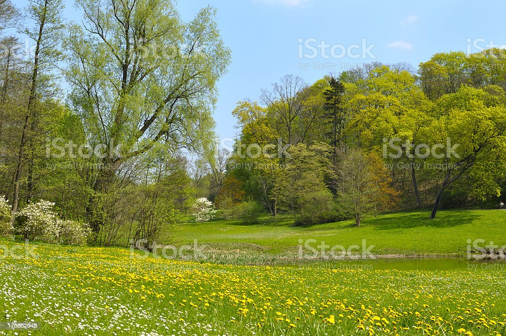 Dandelions in a meadow royalty-free stock photo