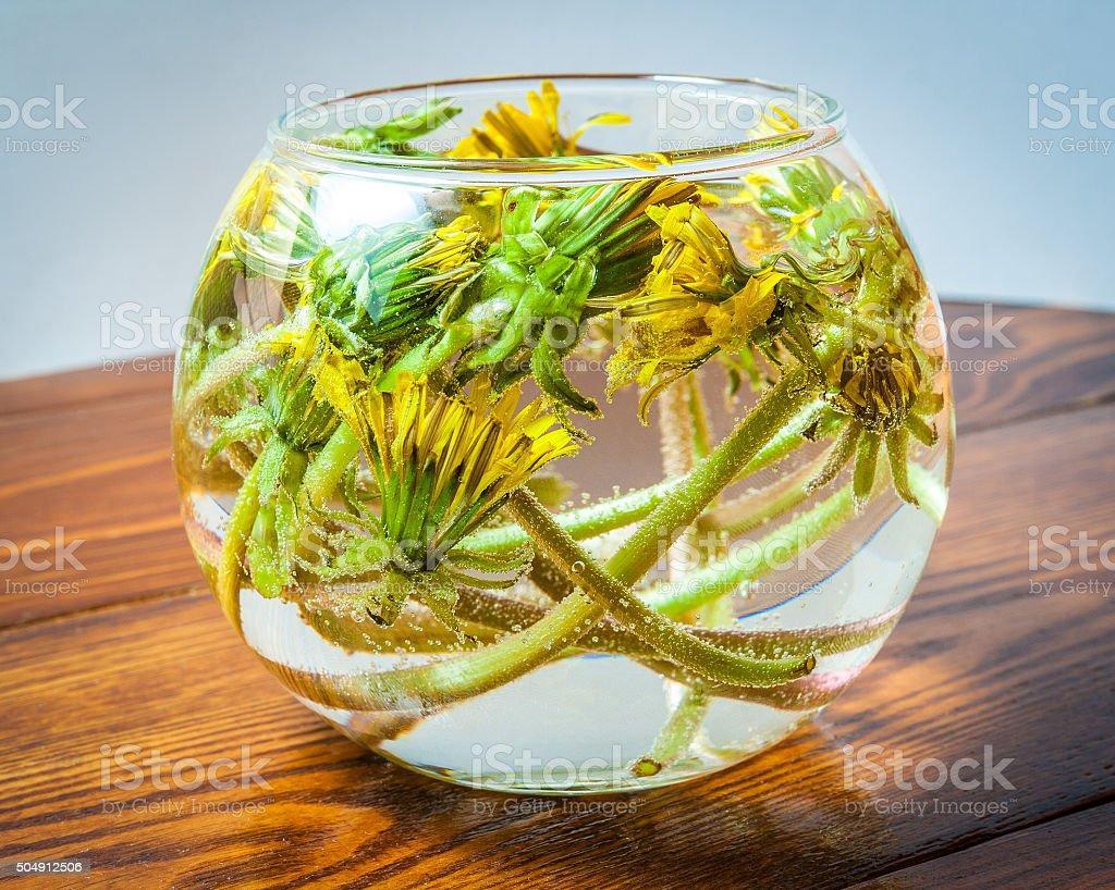 Dandelions in glass vase water stock photo