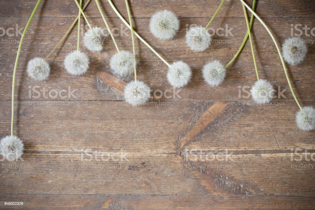 dandelions on a aged wooden background stock photo