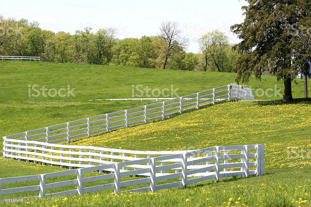 Dandelions on a Horse Ranch royalty-free stock photo