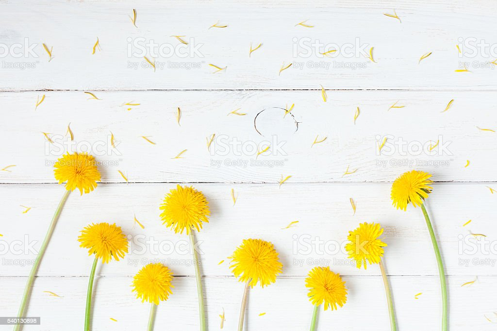 dandelions on wooden white background flat lay stock photo