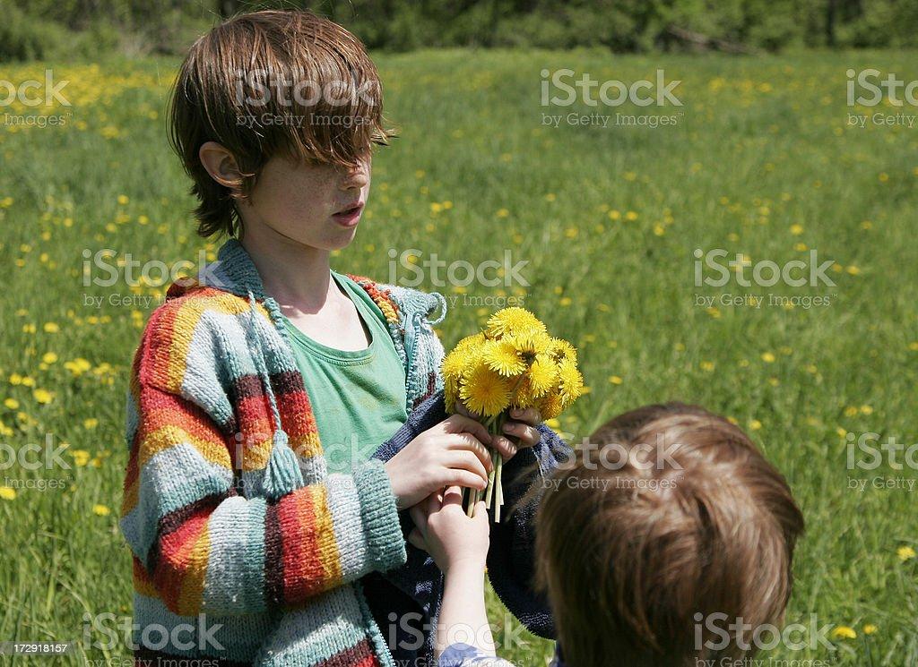 Dandlion bouquet stock photo