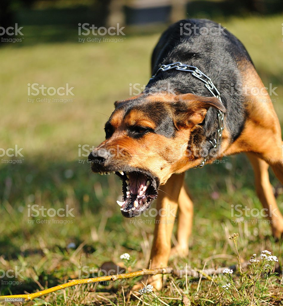 danger dog stock photo