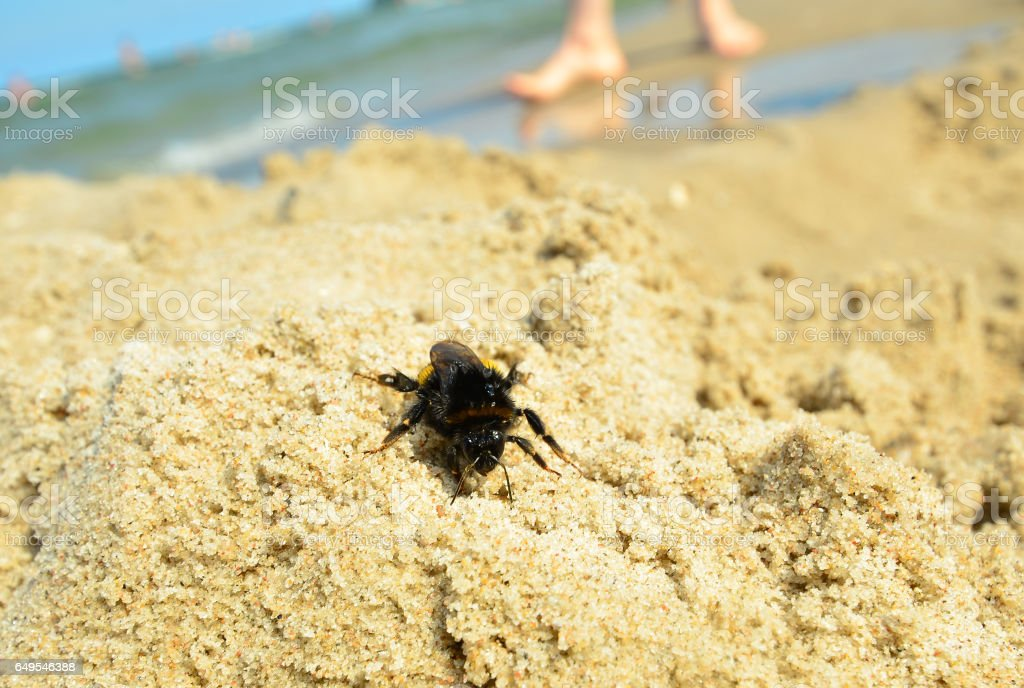 Danger insect sting stock photo