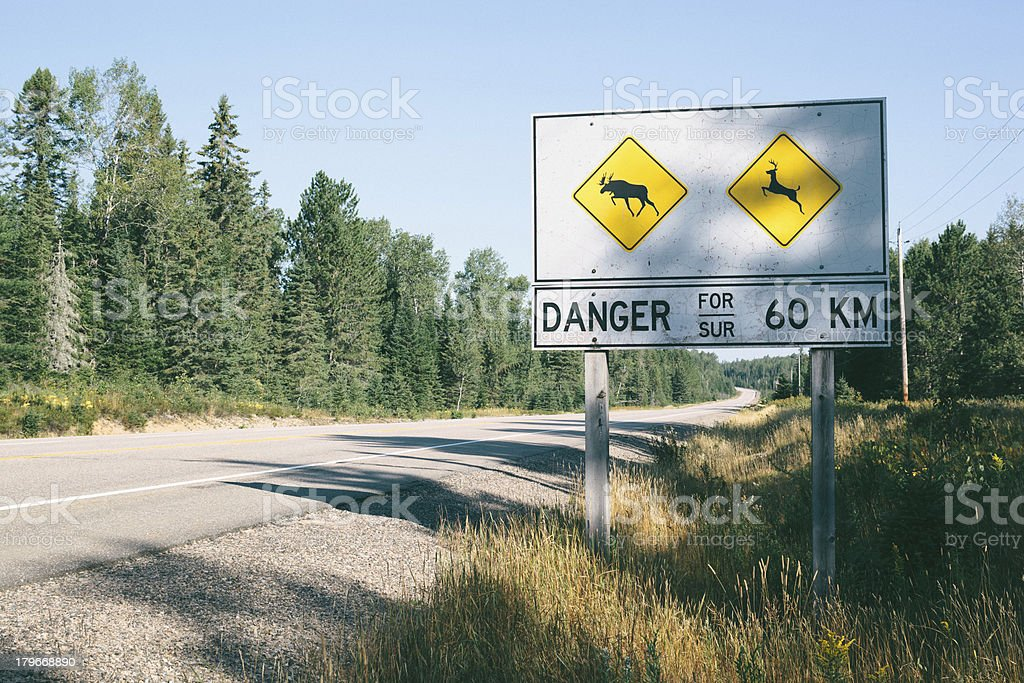 Danger Mooses and Deers royalty-free stock photo