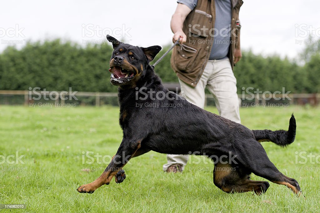 Dangerous dog stock photo