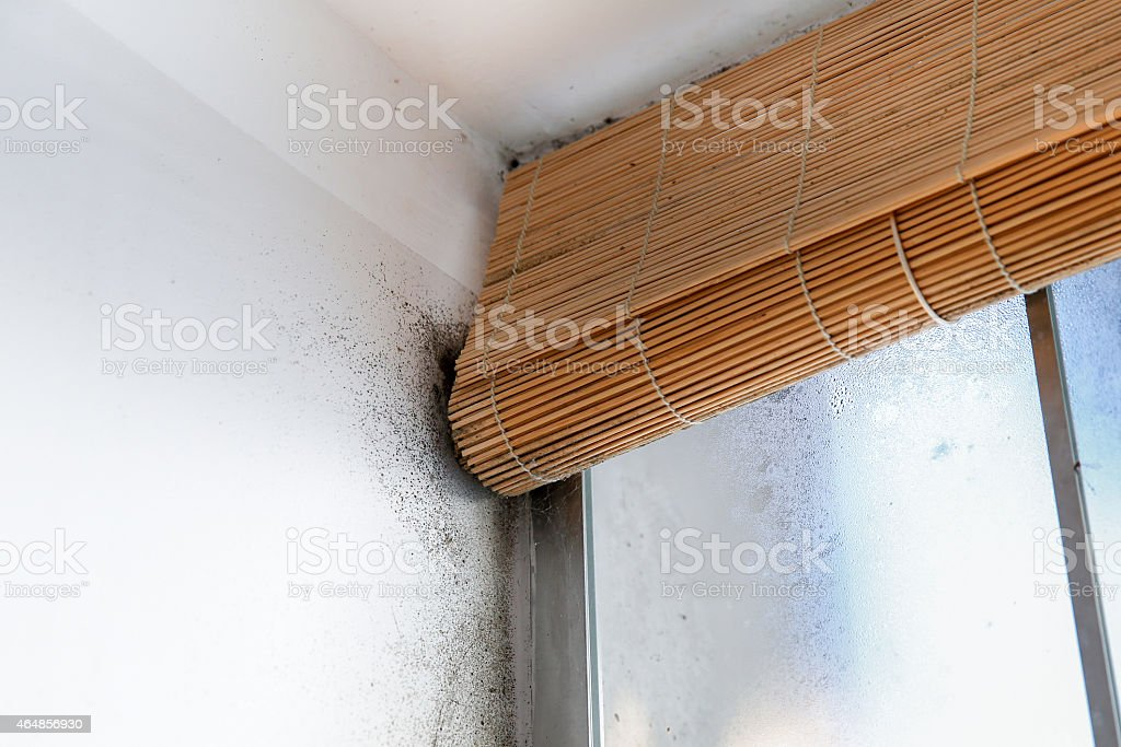 Dangerously mouldy white wall stock photo