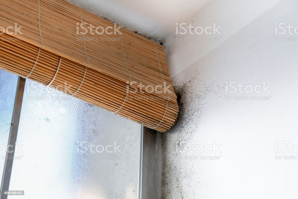 A dangerously mouldy white wall stock photo