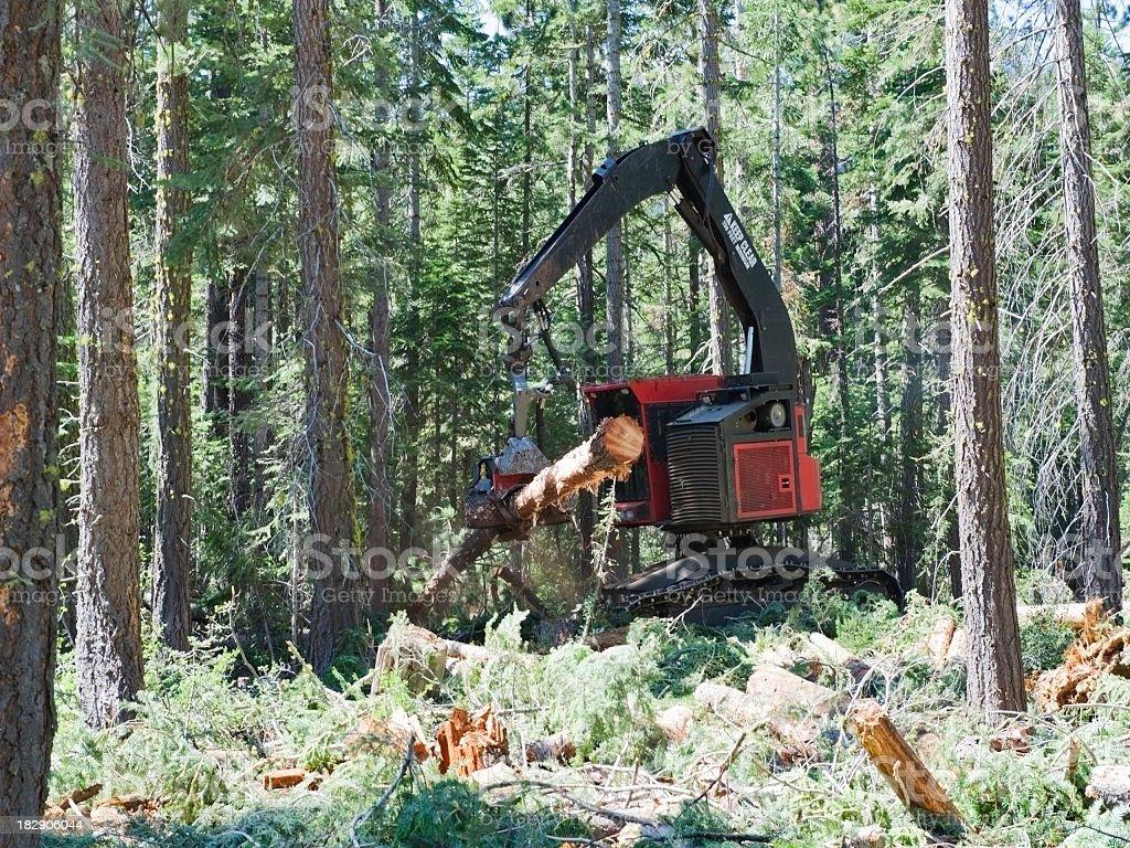 Danglehead Logging Equipment in Forest royalty-free stock photo