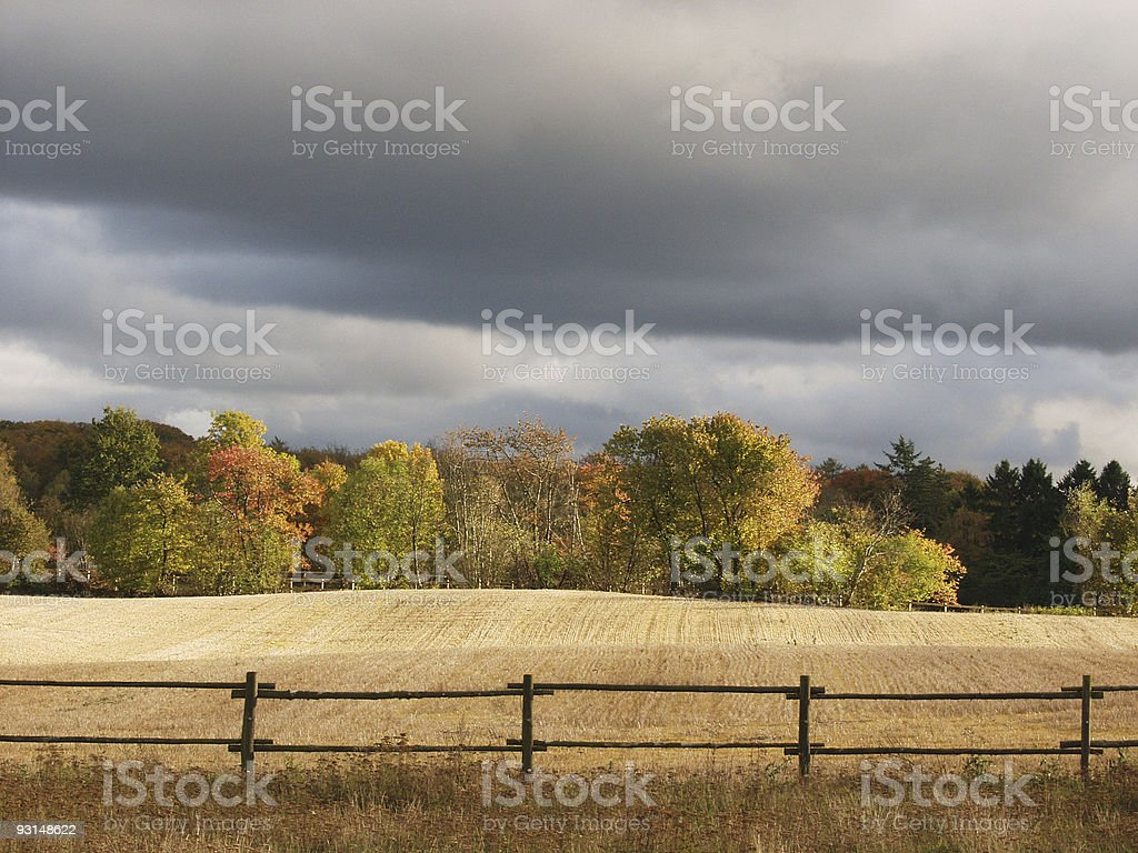 danish autumn forest royalty-free stock photo