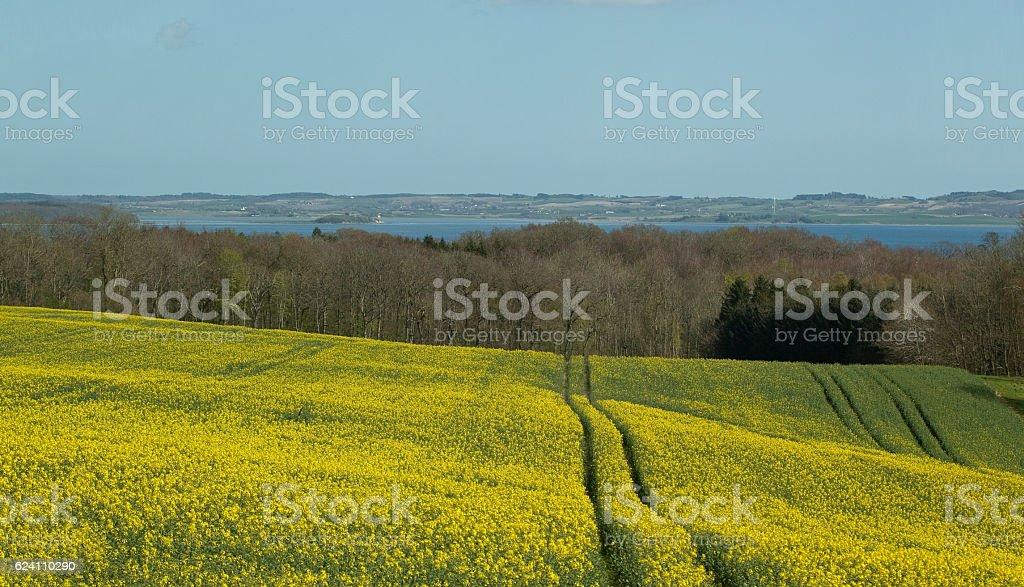 Danish Countryside - Yellow Field, Kaloe Inlet stock photo
