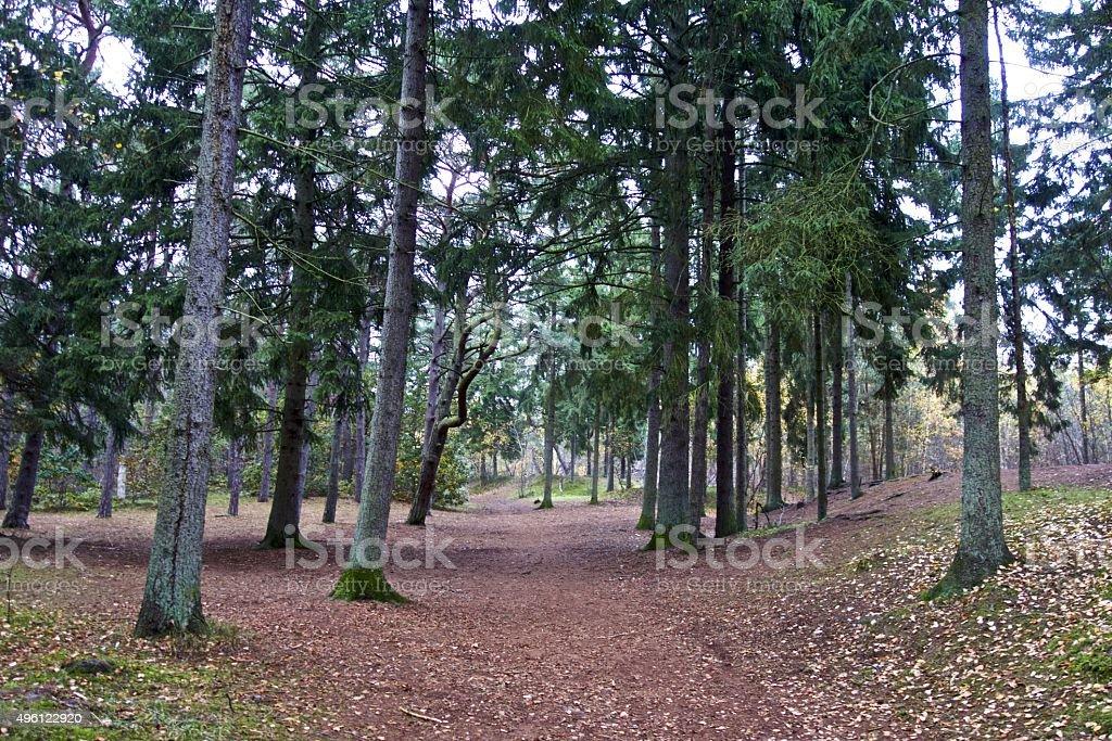Danish evergreens stock photo