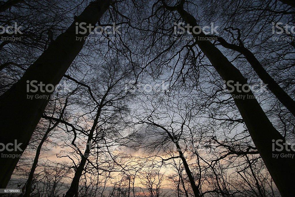 danish trees royalty-free stock photo