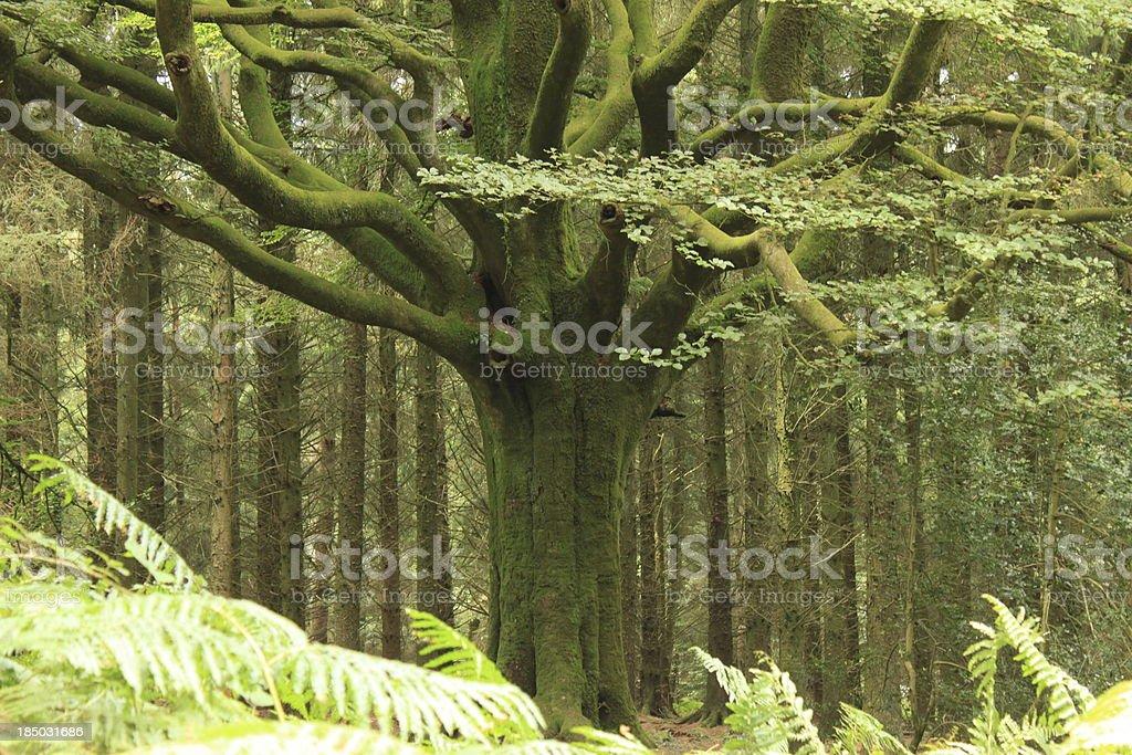 dans la forêt de Brocéliande stock photo