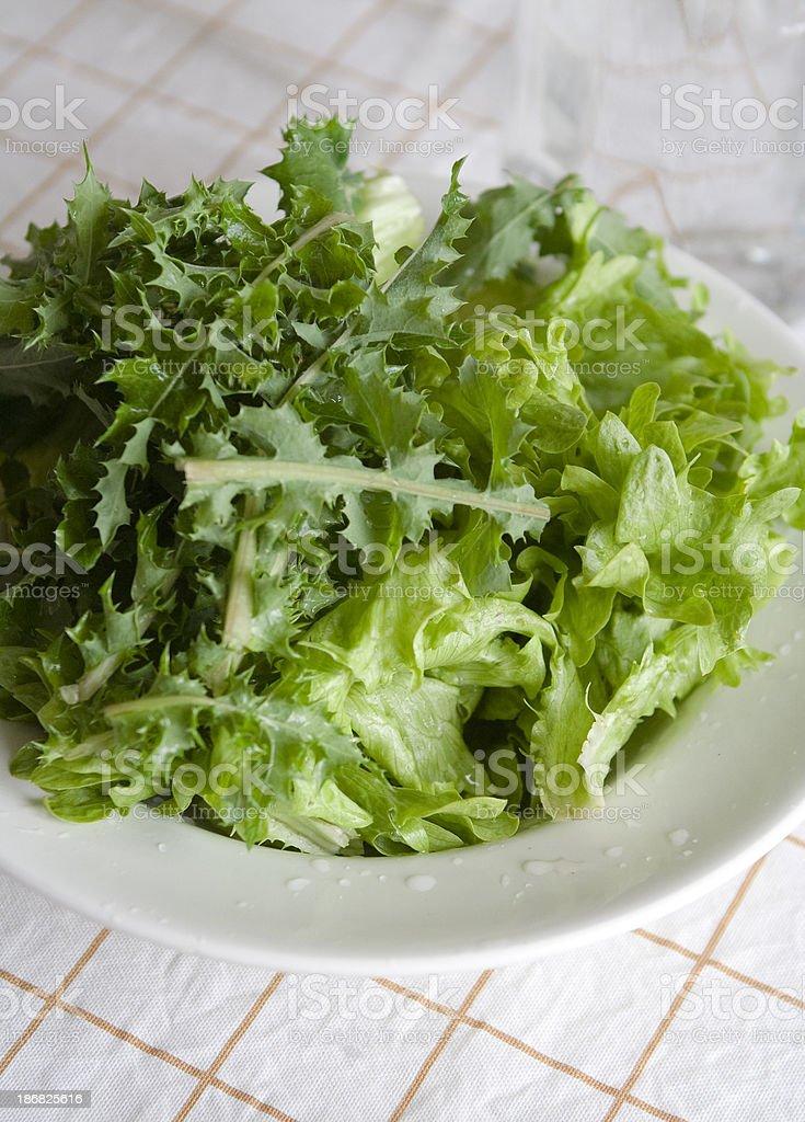 Dantelion Green Salad stock photo
