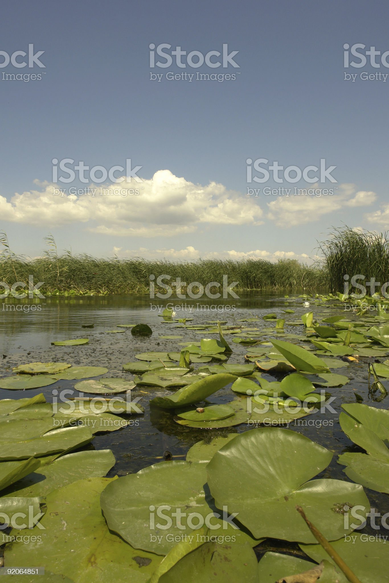donaudelta lillyleafs royalty-free stock photo