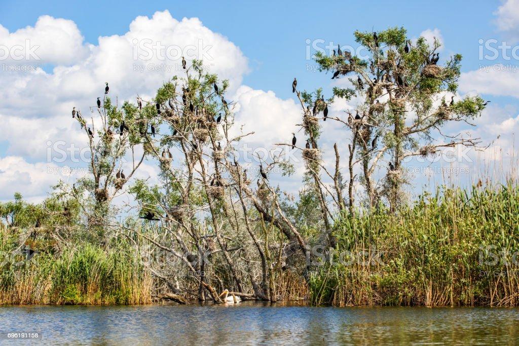 Danube Delta wildlife stock photo