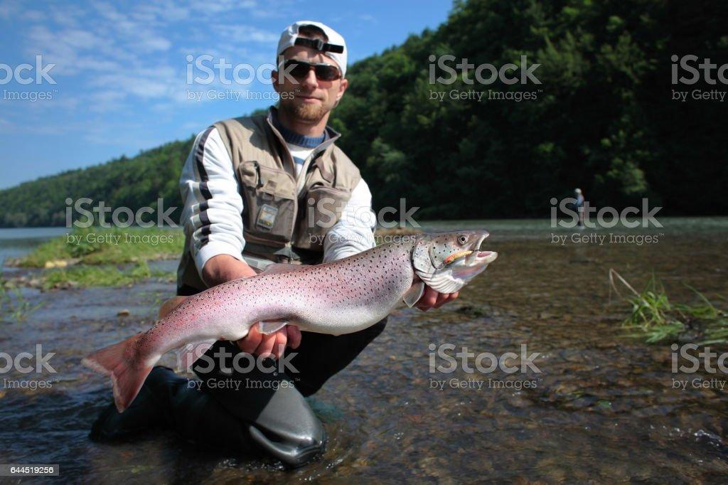 Danube salmon stock photo
