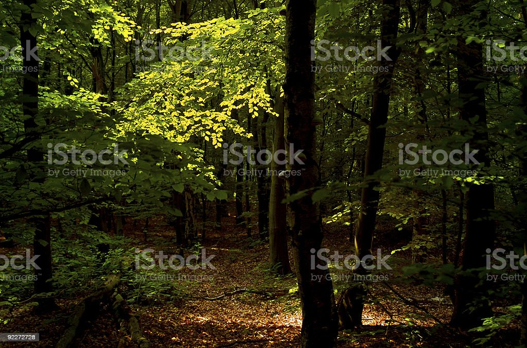 Dappled Forest Light royalty-free stock photo