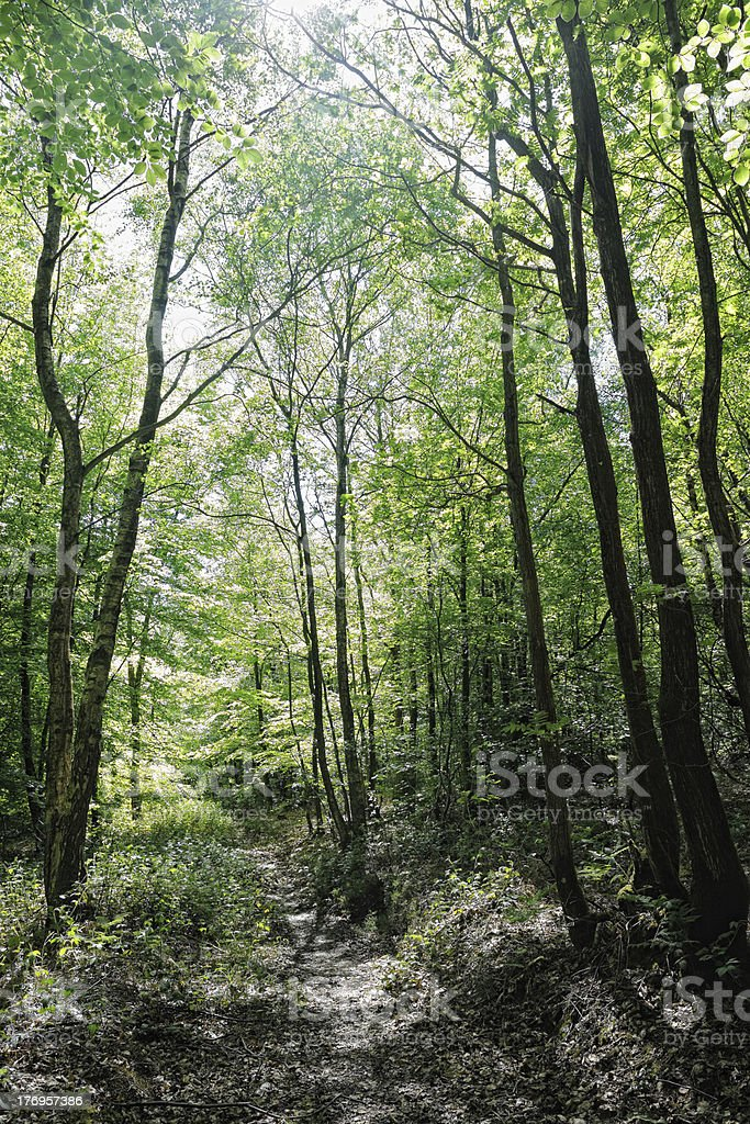 Dappled sunlight breaking onto path through wood royalty-free stock photo