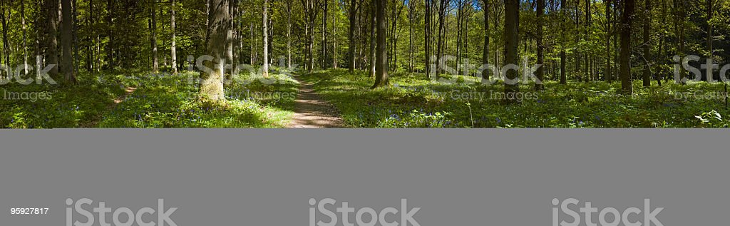 Dappled sunlight cool forest shade royalty-free stock photo