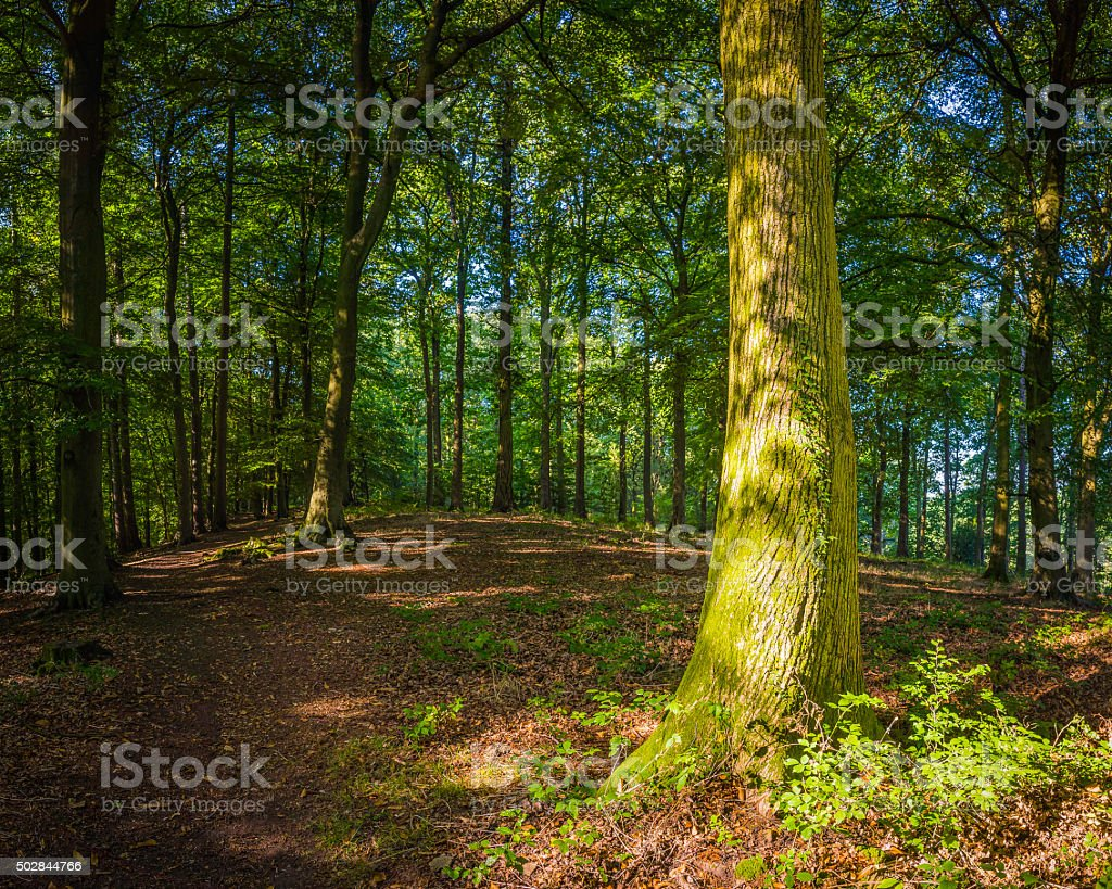 Dappled sunlight idyllic woodland clearing deep in the green forest stock photo