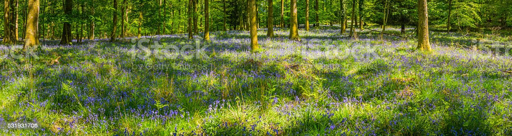 Dappled sunlight in magical woodland glade idyllic summer forest panorama stock photo